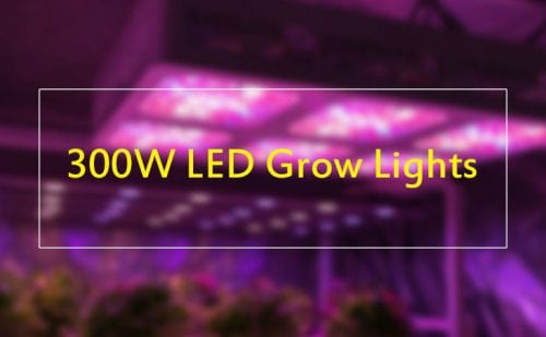 10+ [ 300 watt LED Grow Lights ] of 2019 - Buyer's guide