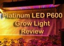 Platinum LED P600 - Featured