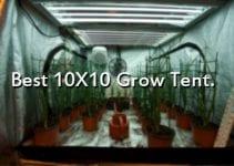 best 10x10 Grow Tent
