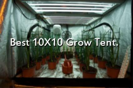 2 Best 10X10 Grow Tent For Indoor Gardening [Complete Review]