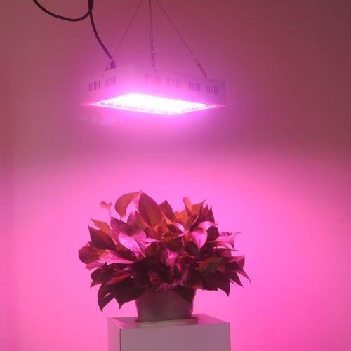 Best 1000 watt LED grow light