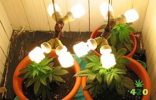 CFLs grow light.jpg