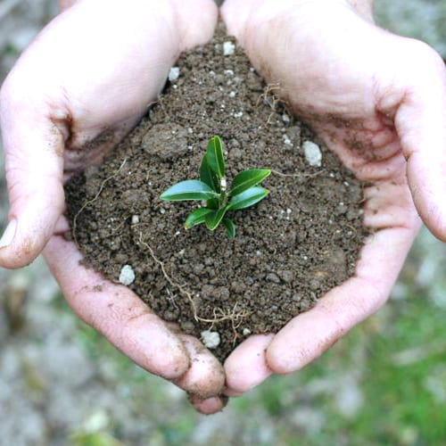 How to Grow with Organic Super Soil