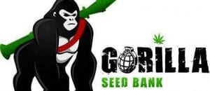 GORILLA Seed Bank Review