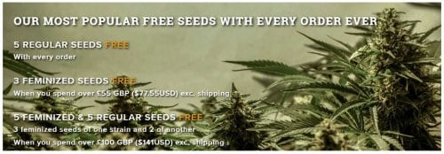 MSNL free seeds promotions and discounts