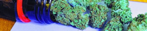 Best Strains for Pain