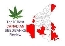 top10-best-canadian-seed-banks-review