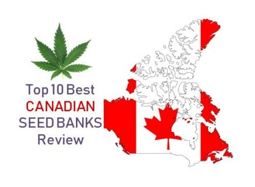 Top 10 best Canadian Seed Banks