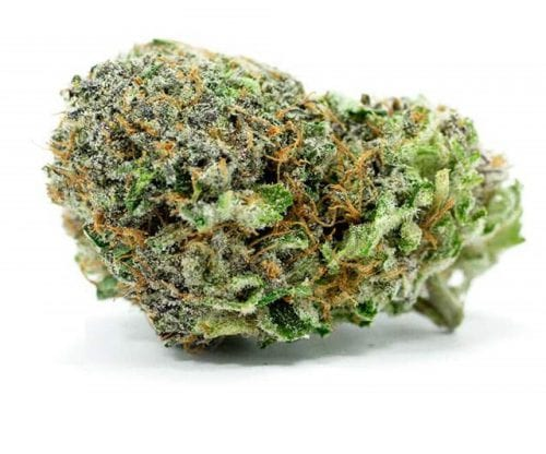 Green Crack medical marijuana strain