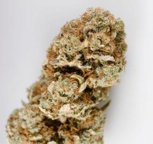 Harlequin-cannabis-strain