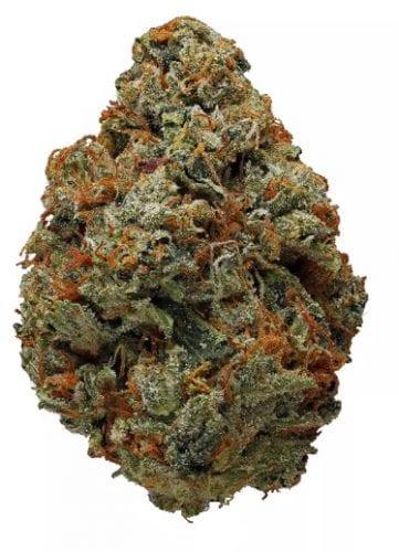 OG-KUSH-cannabis-strain
