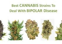 cannabis-strains-bipolar