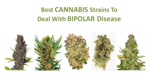 best cannabis strains for bipolar disorder