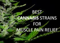 cannabis-strains-for-muscle-pain-relief