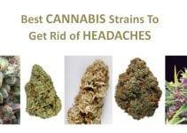 cannabis-strains-headache