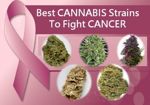 Best cannabis strains to fight cancer symptoms