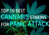 10 best cannabis strains for panic attack