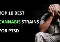 best cannabis strains for PTSD
