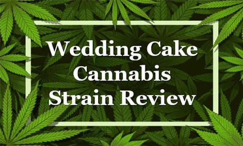 Wedding Cake Cannabis Strain Review