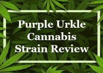 Purple Urkle Cannabis Strain Review