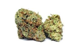 Hash Plant Cannabis Strain Review