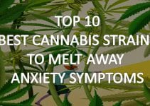 best-cannabis-strains-for-anxiety
