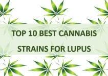 best cannabis strains for lupus