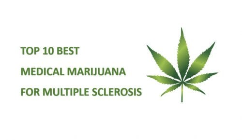 best cannabis strains for multiple sclerosis featured