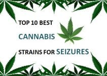 best cannabis strains for seizures