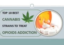 best cannabis strains to reduce opioid dependence
