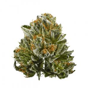 bubba kush marijuana