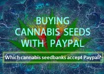 buying-cannabis-seeds-with-paypal