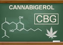 what is CBG in cannabis - cannabigerol