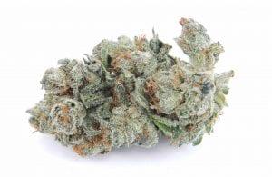 white berry cannabis strain