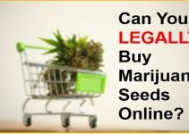 Can You LEGALLY Buy Marijuana Seeds Online?