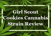 Girl Scout Cookies Cannabis Strain Review