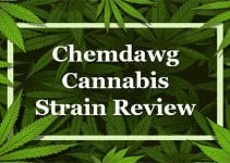 Chemdawg Cannabis Strain Review