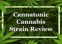 Cannatonic Strain Review
