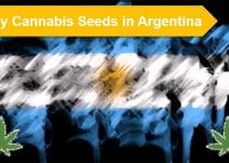 Cannabis seeds in Argentina
