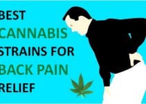 best cannabis strains for back pain relief