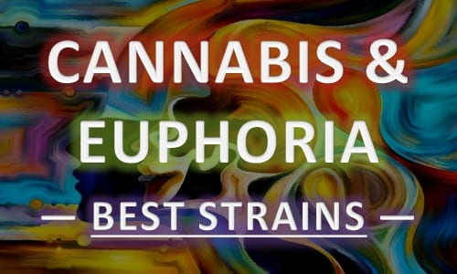 best cannabis strains for euphoria and happiness