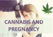 cannabis and pregnancy