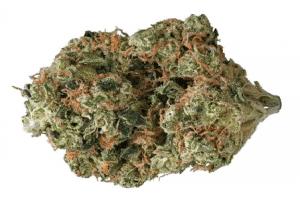 obama kush cannabis strain