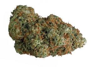yogi kush marijuana strain
