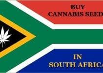 Cannabis in SA
