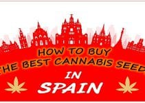 Cannabis in Spain