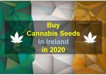 Cannabis in Ireland