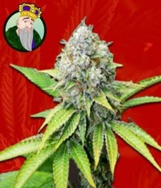 OG Kush - best hybrid strains