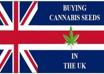 Cannabis in the UK