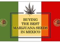 Cannabis in Mexico